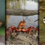 Ambiente : Specie invasive, l'Italia si adegua alle direttive europee