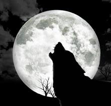Lupo--luna